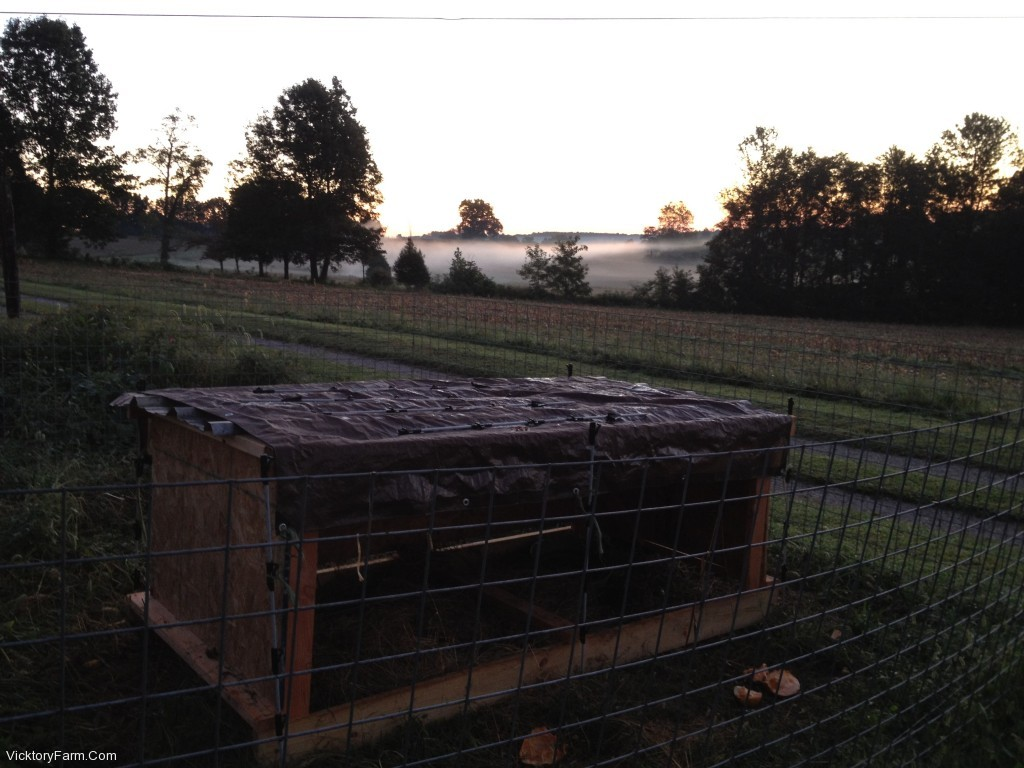 Morning View over Pig Pen