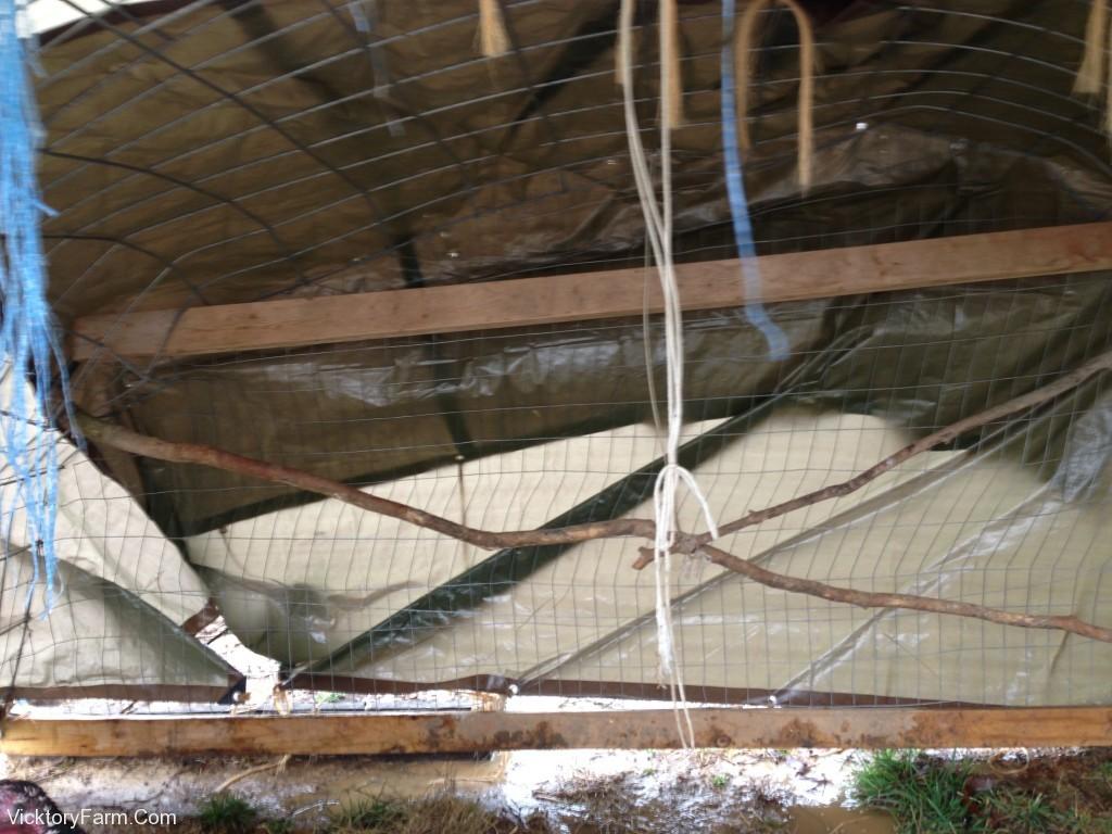 Inside the deformed coop