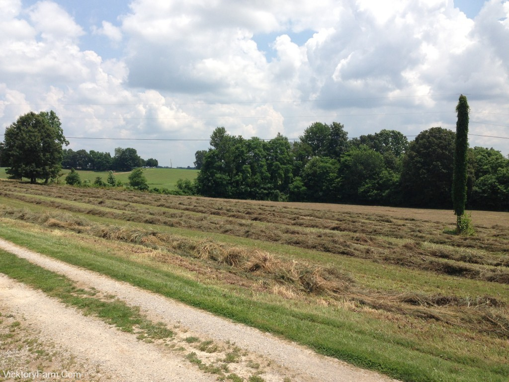 Hay Rows - Big Field